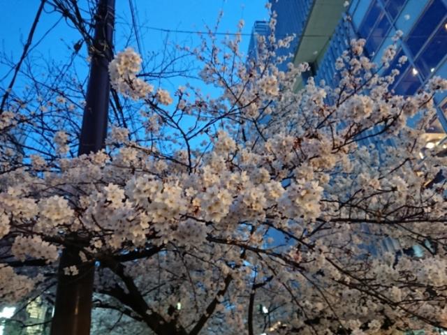 木屋町の夜桜2018(1)
