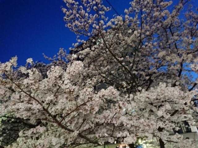木屋町の夜桜2018(2)