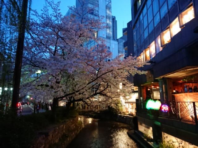 木屋町の夜桜2018(3)