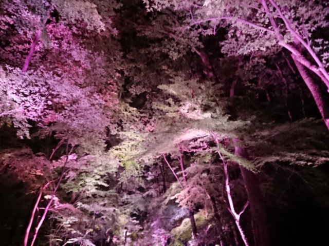 下鴨神社・糺の森 光の祭(1)