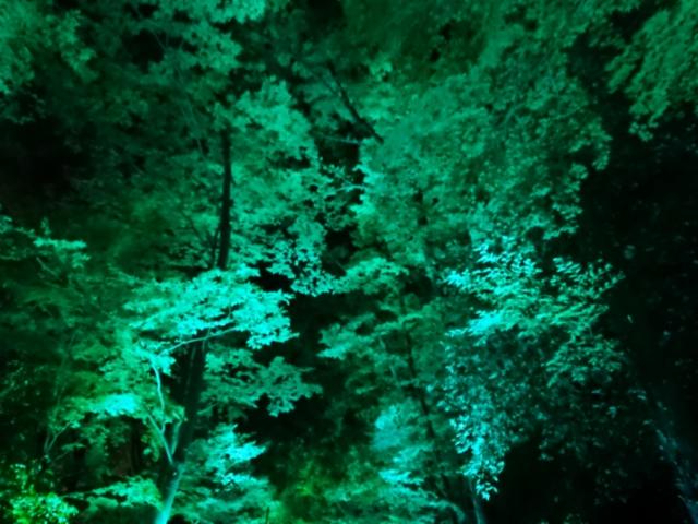 下鴨神社・糺の森 光の祭(3)