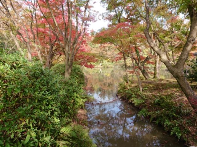 京都府立植物園の紅葉2018(2)