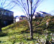 2005010214odoi.jpg